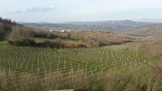 Crisi del vino in Irpinia – Cause e soluzioni