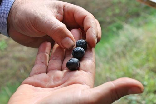 3-olive-1