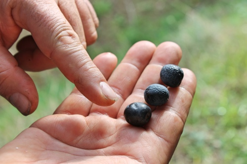 3-olive-2