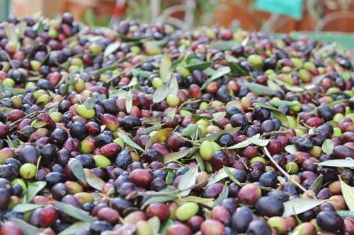 olive-insieme