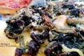 Pizza Borragine Cardone e Finocchietto