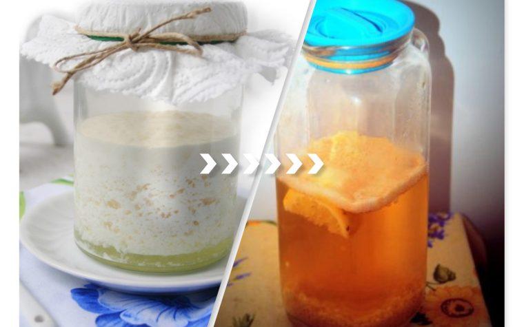 trasformare il kefir di latte in kefir d'acqua