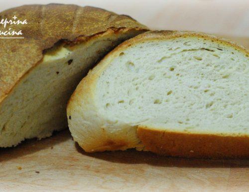 pane con starter al kefir di latte