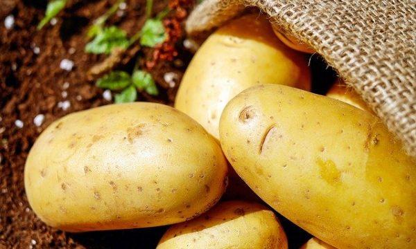 Patate, come auto-produrle in casa propria in pochi passi