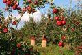 Sostenibilità perchè è importante nella nostra alimentazione