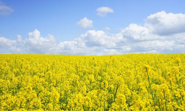 Piante perenni, il futuro della sostenibilità alimentare