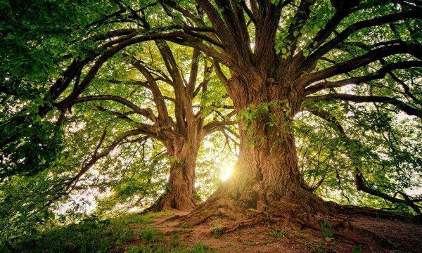 Easy green Hosting realizza il tuo sito ecologico e adotta un albero