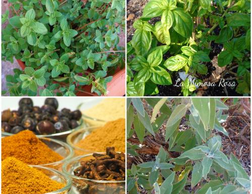 Erbe aromatiche e spezie, come abbinarle alle verdure