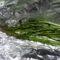 Asparagi selvatici al cartoccio
