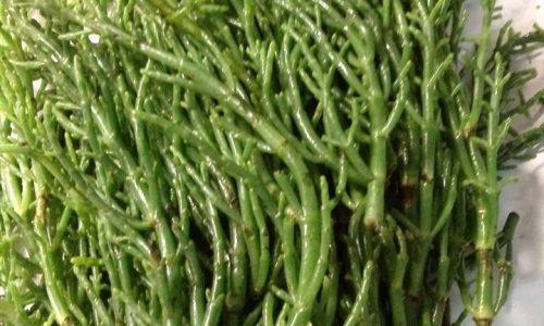 Asparagi di mare (alghe marine)