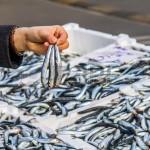 Primo di Pesce a pochi Euro