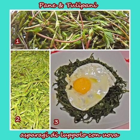 243-asparagi di luppolo con uova.2