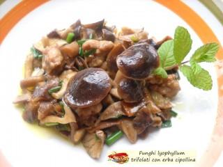 Funghi lyophyllum trifolati con erba cipollina.2