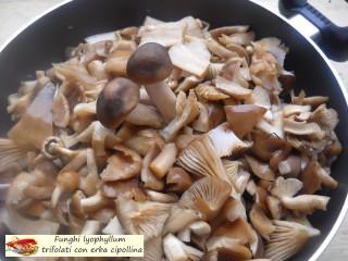 Funghi lyophyllum trifolati con erba cipollina.4
