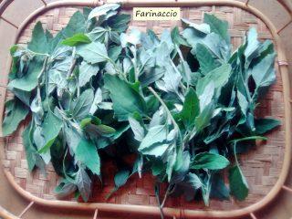 farinaccio