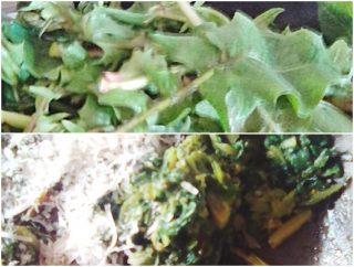 Involtini con verdura di campo