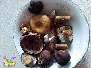 crostoni con funghi misti