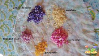 pappardella con fiori edulie pomodorini