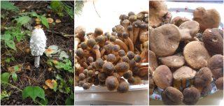 padellata con zucca, funghi e speck