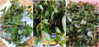pesto di portulaca con mandorle e semi di zucca